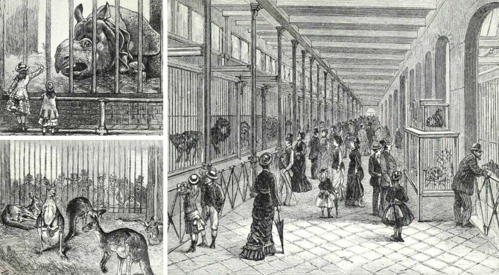 Illustrations of the Philadelphia Zoo